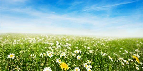 La posizione del fiore e i benefici di 4 fiori di primavera